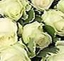 13 trandafiri albi