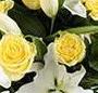 Crini si trandafiri